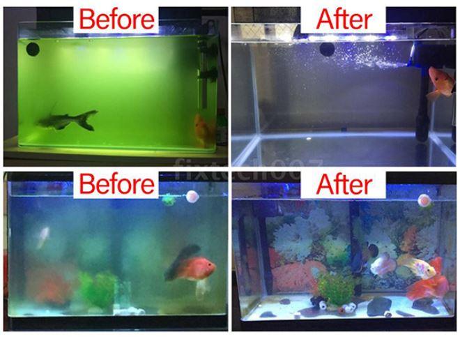 lợi ích diệt tảo của đèn tia uv diệt khuẩn nước